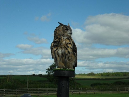 World of Country Life: Hawkridge Birds Of Prey