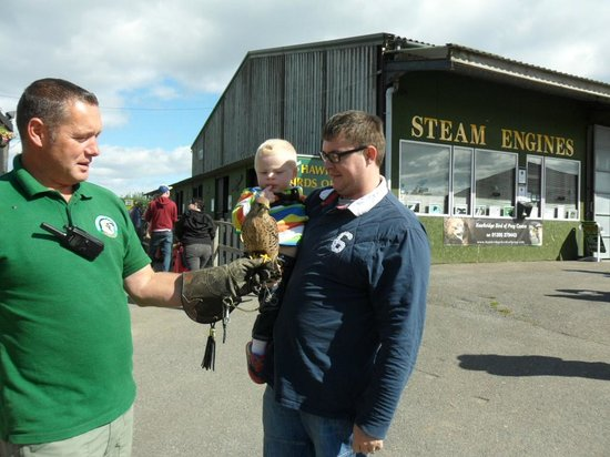 World of Country Life : My husband and son with a Kestrel