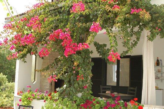 Quinta Colina Flora: Outside the Magnolia Room