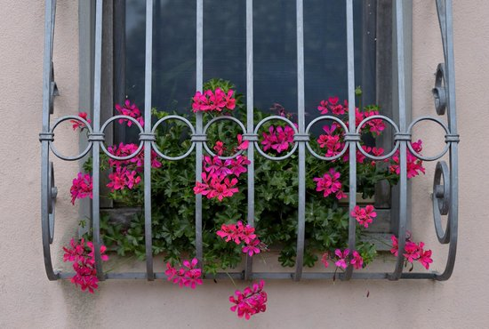 B & B Il Gelsomino: Some of the many beautiful flowers at their house