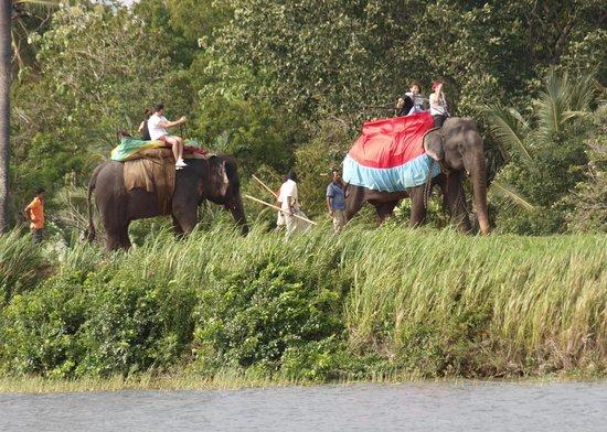 โรงแรมชายา วิลเลจ ฮาบารานา: The elephant rides close by