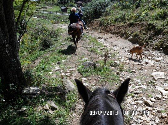 Highlands at Sugar: Horseback ride from Banner Elk stables