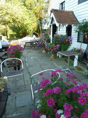 The Old Vine: Front garden