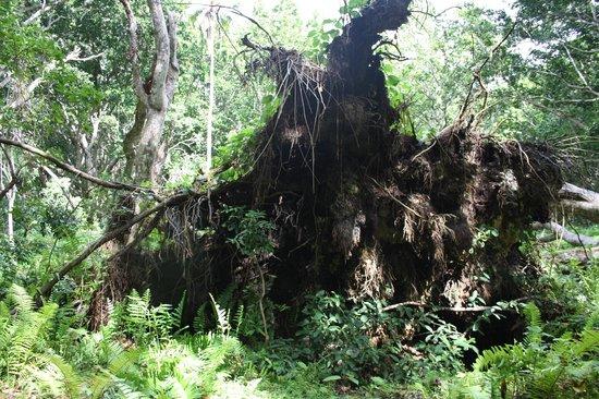 Jozani Forest Reserve : Jozani forest