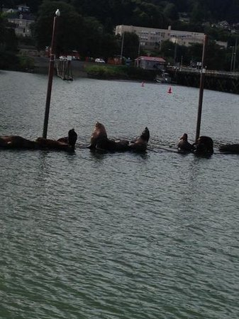 Columbia River Eco Tours: Sea lions we saw during our tour.