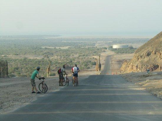 Anantara Desert Islands Resort & Spa: Biking/Desert Safari.
