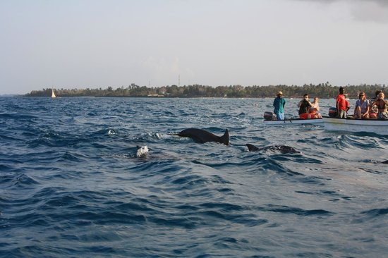 Kizidolphintours day tours: Course aux dauphins