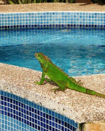 Hotel Giada: 1 van de huisdieren in de achtertuin.