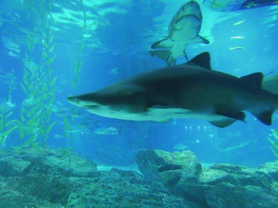 brave people - Picture of SEA LIFE Busan Aquarium, Busan - TripAdvisor
