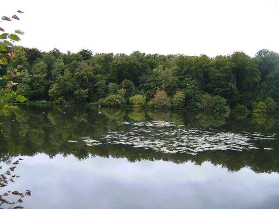 Les Etangs de Commelles : une ondine au bord de l'étang...plouf elle a plongé...