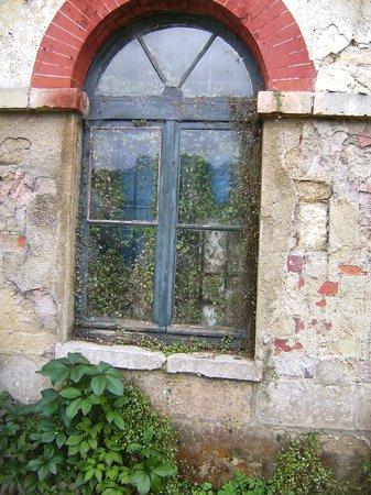 Les Etangs de Commelles : la fenêtre de la belle et la bête...