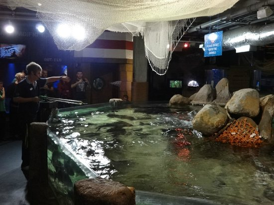 Live fish feeding picture of blue planet aquarium for Live fish direct