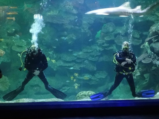 Aquatheatre Show Featuring Two Divers Picture Of Blue