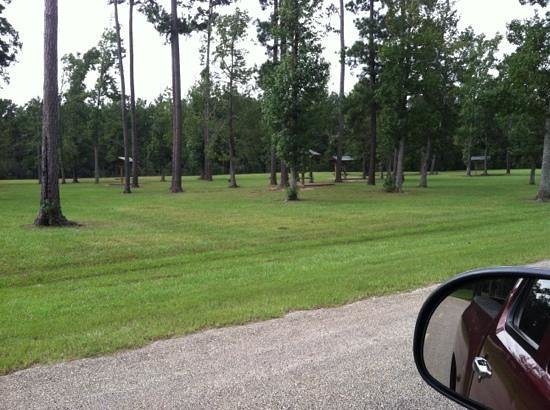 Vidor (TX) United States  City pictures : wildlife Picture of Claiborne West Park, Vidor TripAdvisor