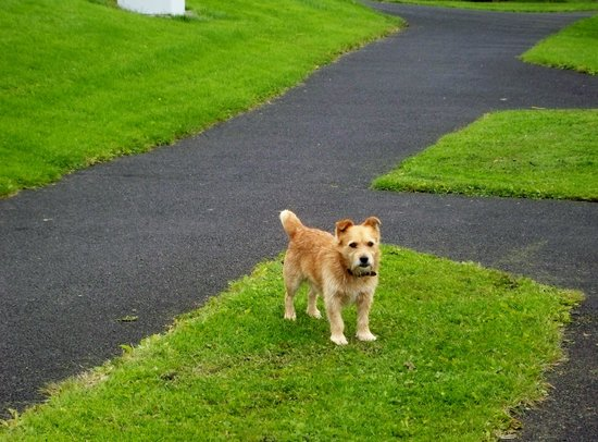 East Clare Golf Village by Diamond Resorts: Guided walks by the little dog!!!