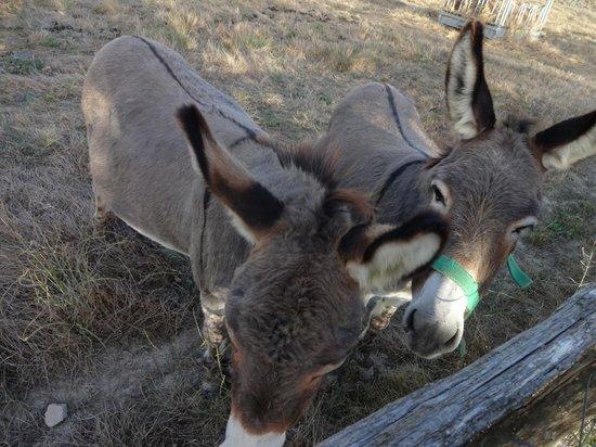 Il Canto del Sole : Friendly donkeys