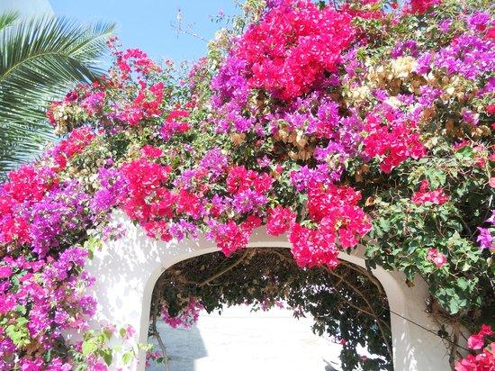 Grupotel Oasis : flowers near the bar