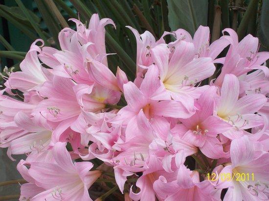 Casa Seralba B&B: fiori