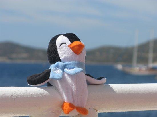 "Aqua Princess Hotel: Our holiday ""Pengi"" catching some rays!"