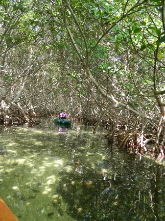 Blue Planet Kayak Eco-Tours : Guide Sarah leading the mangrove way