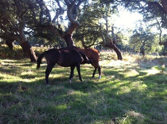 Agriturismo Montiferru : agriturismo immerso nel verde