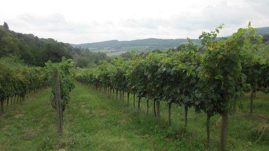 Agriturismo Fontecastello: property grounds