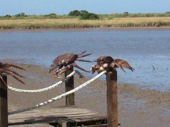 Termas Marinas: Bahia cangrejo