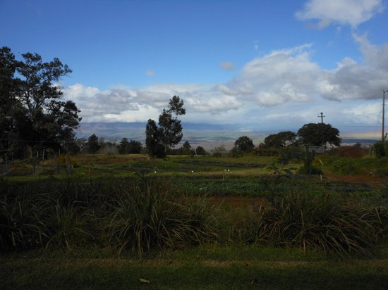 O'o Farm: Fresh food and great views!