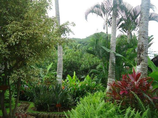 Hyatt Ziva Puerto Vallarta: Verdes y bien cuidados jardines