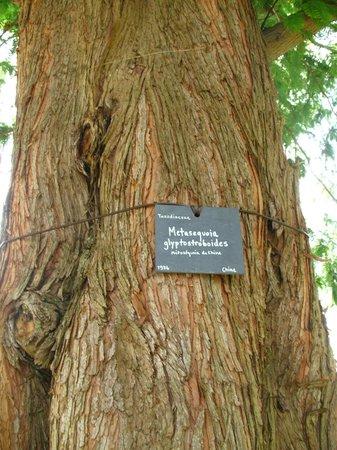 Parc et Jardins du Chateau d'Acquigny: Parc botanique, Acquigny possède de nombreux arbres centenaires et rares