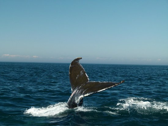 Petit Pasage Whale Watch : Classic whale tail - Photon