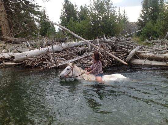 Sweet Grass (Dude) Ranch : swimming with another horse