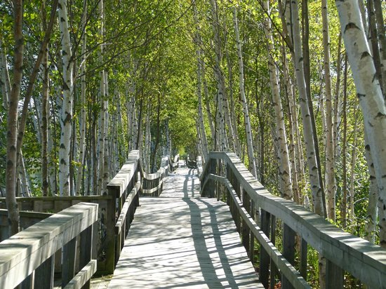 Sackville Waterfowl Park: Beautiful boardwalk