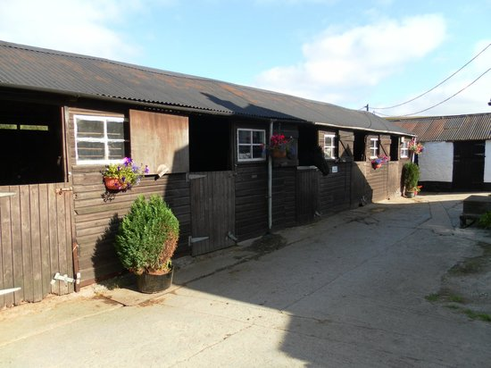 Cholwell Riding Stables: Stable area