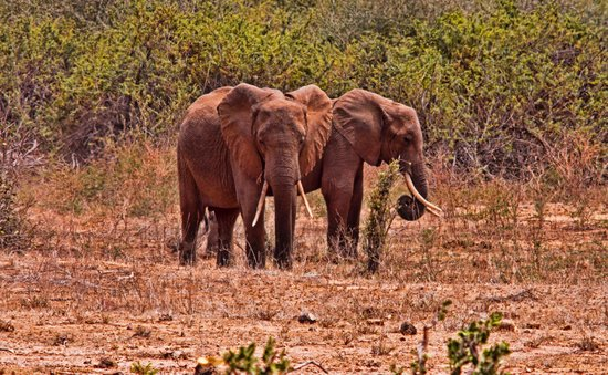 Blue Bay Village: elefanti
