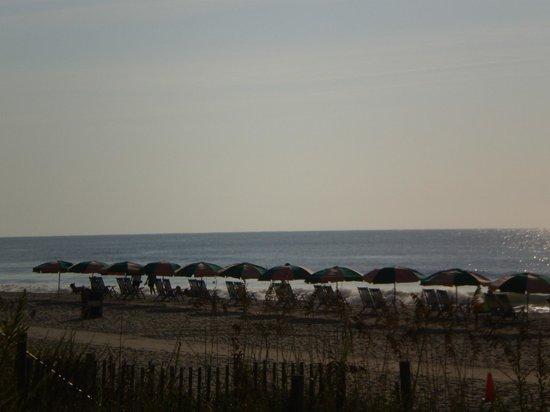 Serendipity Inn: myrtle beach