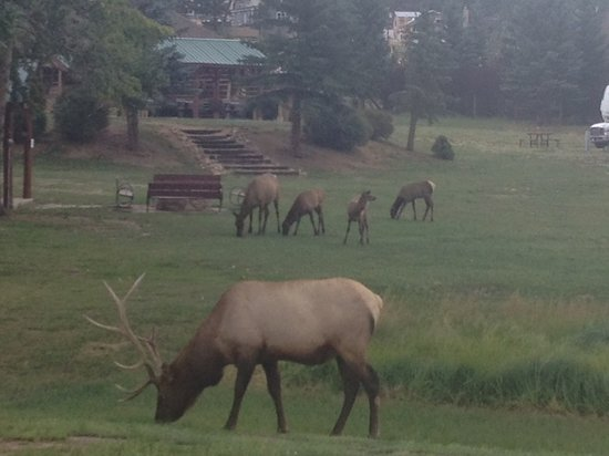 Brynwood on the River: You will always see wildlife in Estes Park!