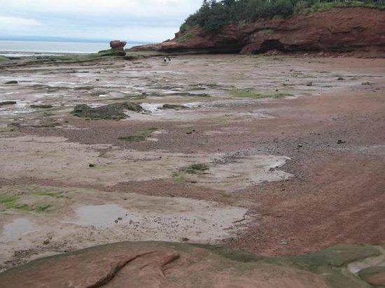 Burntcoat Head Park: Low tide.