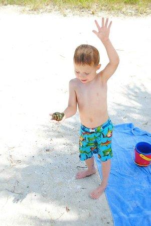 Robert K Rees Memorial Park : Seashells