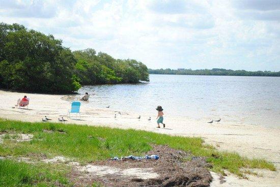 Robert K Rees Memorial Park : Chasing seagulls