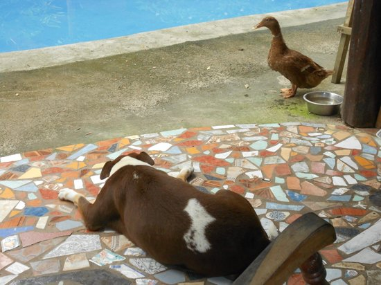The Howler Monkey Hotel: duck and dog