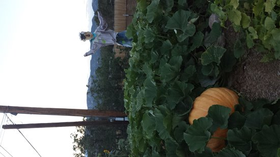 Durango KOA : Look at the size of this pumpkin