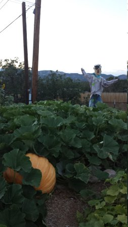 Durango KOA: Look at the size of this pumpkin