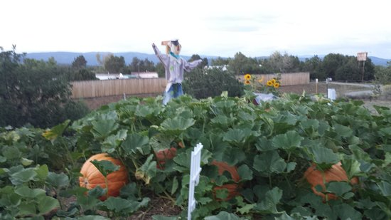 Durango KOA : What an awesome pumpkin patch