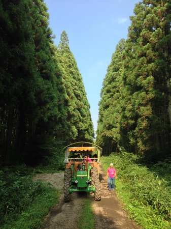 Koiwai Farm Makibaen : 100年杉