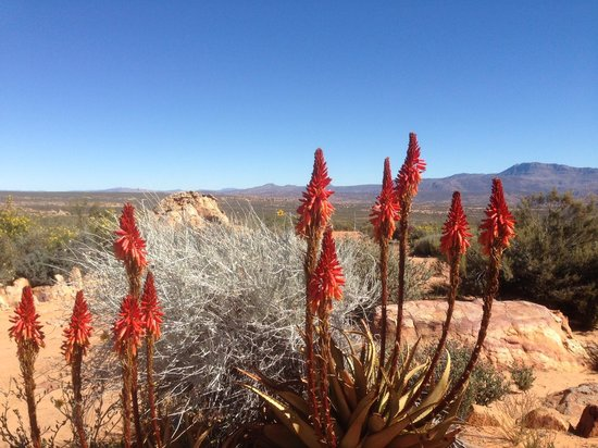Kagga Kamma Nature Reserve: the profusion and variety of wildflowers was amazing