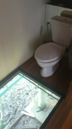 Bangkok Tree House Glass Floor View To Rubbish Under Room