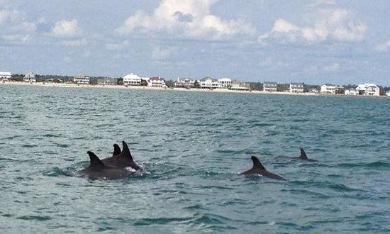 Blue Wave Adventures: LOVE the dolphin tours with Capt. Mark of Blue Water Adventures!!!!! Have gone 7 times and every