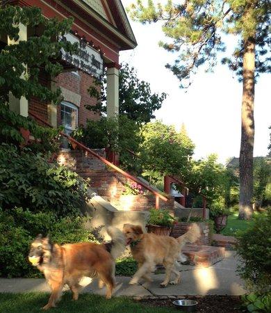 The Roosevelt Inn: Sport and hotel's resident dog, Rohan.