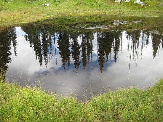 Courthouse Inn Revelstoke: Reflection in Heather Lake on Mt. Revelstoke (N.P.)